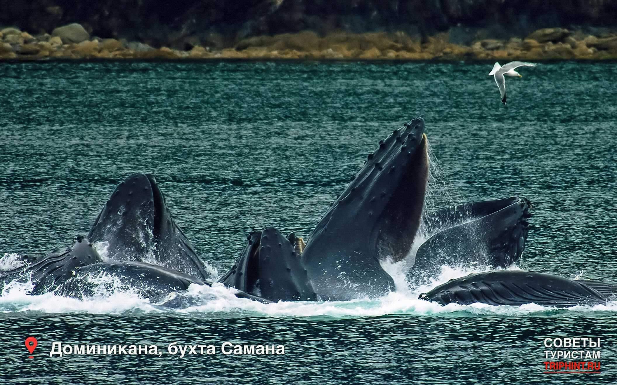 Что посетить в Доминикане в декабре: бухта Самана, горбатые киты