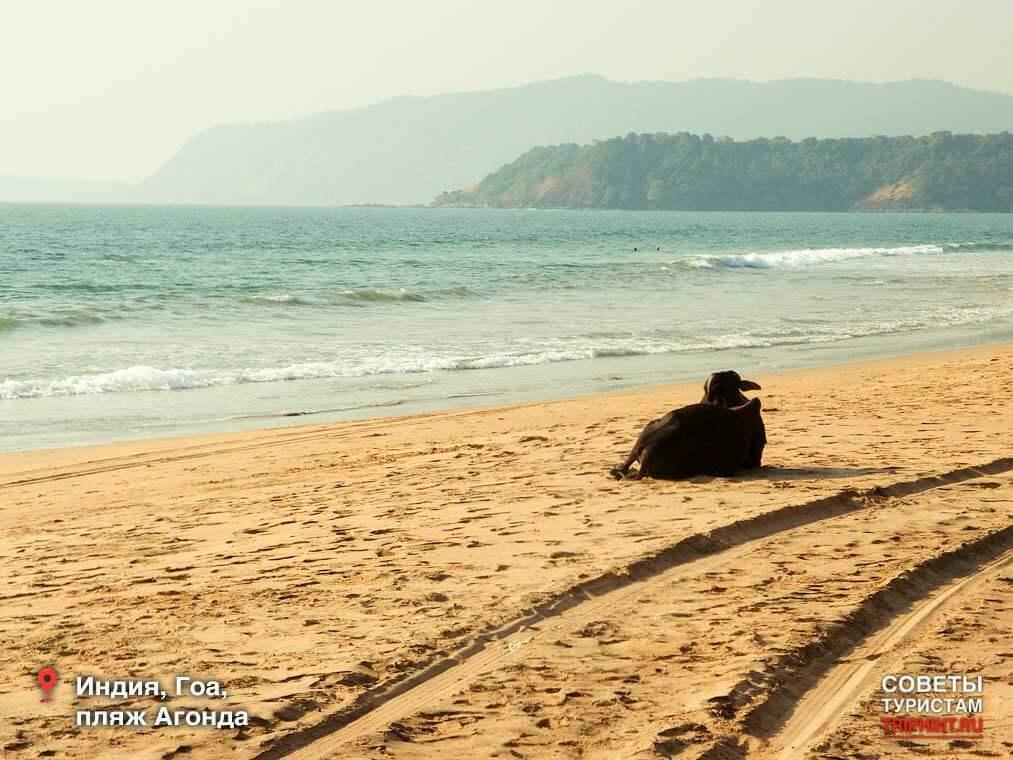 Отдых на Гоа в декабре - пляж Агонда