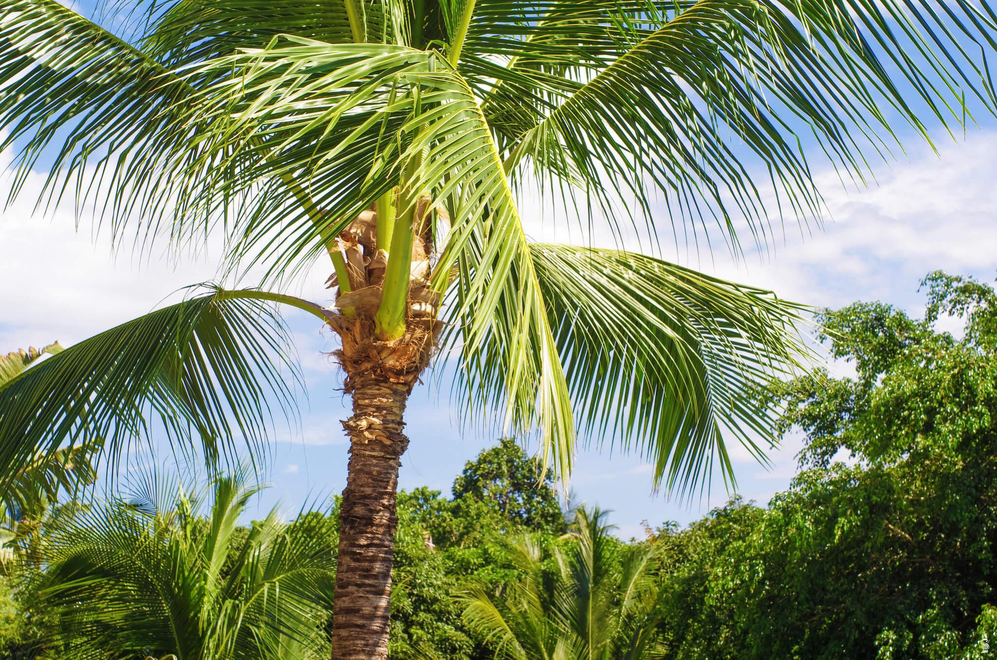 Таиланд, солнце, небо, пальмы.