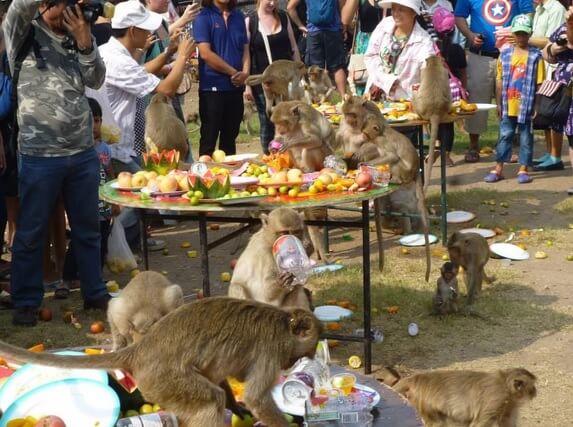 Таиланд, фестиваль обезьян Лопбури.